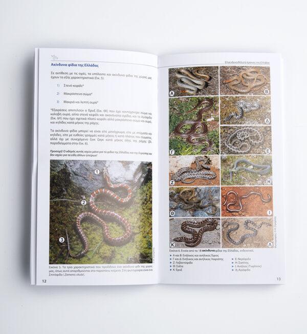 Εγχειρίδιο Τσέπης Επικίνδυνα Φίδια & Αράχνες της Ελλάδας του Ηλία Στραχίνη